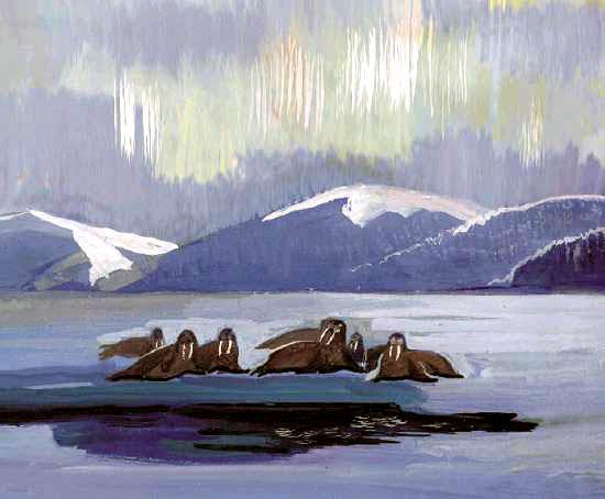 Тундра моржи