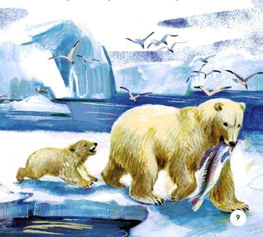 Белый медведь тащит рыбу и медвежонок