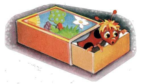 Божья коровка в спичечном коробке