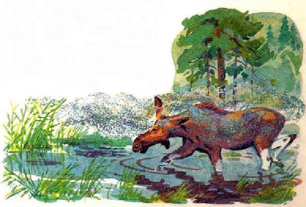 лось у болота и комаринная стая