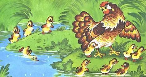 Курочка Ряба и десять утят вылазят из воды