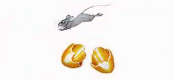 Мышка бежала, хвостиком задела, яичко упало и разбилось.