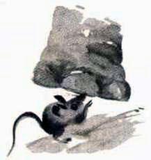 Макс мышка