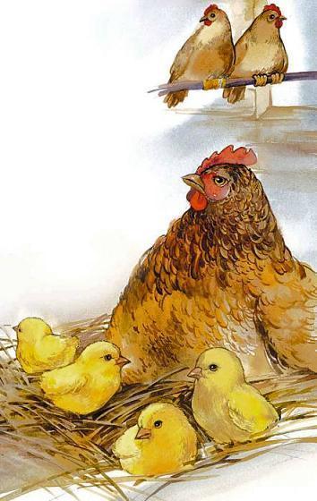 цыплята и курица в гнезде