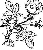 муравей Ферда на цветке на стебле