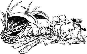 муравей Ферда и молодая муравьинная мама