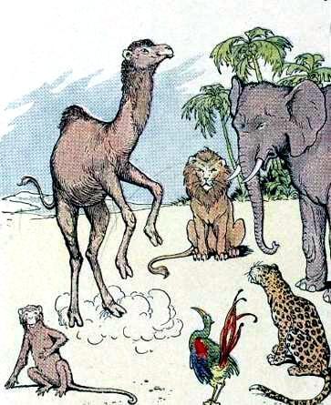 Обезьяна и верблюд