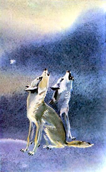 Отчего волк на Луну воет - Русские сказки: читать с ...