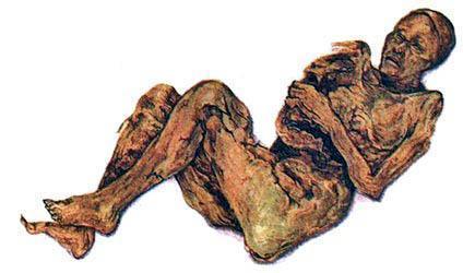 Тело этой женщины хорошо сохранилось благодаря повышенной кислотности в торфяном болоте, где его нашли. Человеческие останки дают сведения о том, как люди питались и какими болезнями болели.