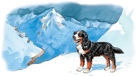 Сан-готардская собака