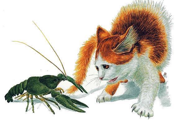 рак и кошка
