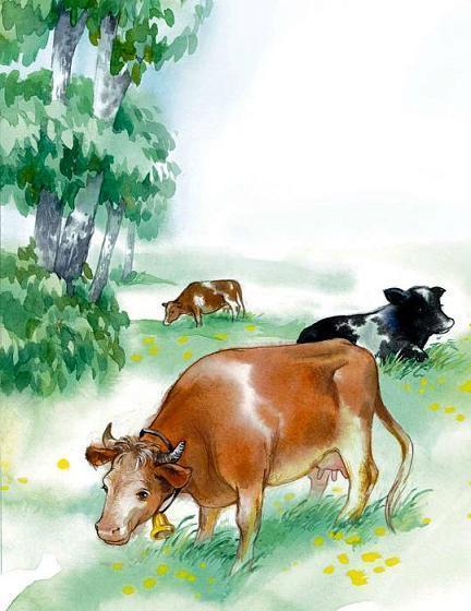 коровы пасуться