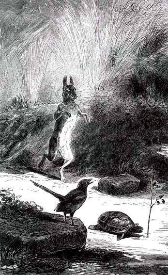 Заяц и черепаха - Сказки Лафонтена: читать с картинками ...